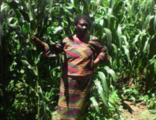 Fertilizer Trade Platform: Growing Opportunities for SMEs and Food Security