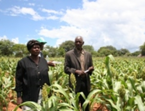 Innovative use of Fertilizers revives hope for Africa